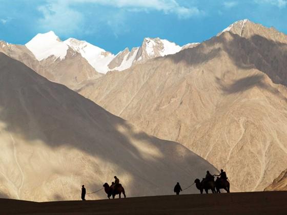 Dazzling Leh Ladakh – Camel Safari in Ladakh
