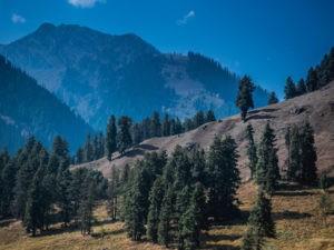 Scenic Kashmir - India