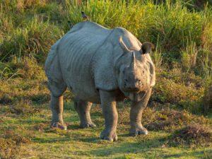 Kaziranga National Park - Assam