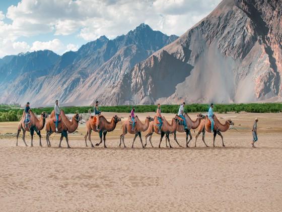 Camel Safari in Ladakh – Himalaya Visit